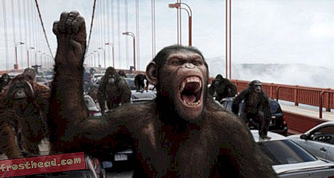 Rise of the Chimp Movies