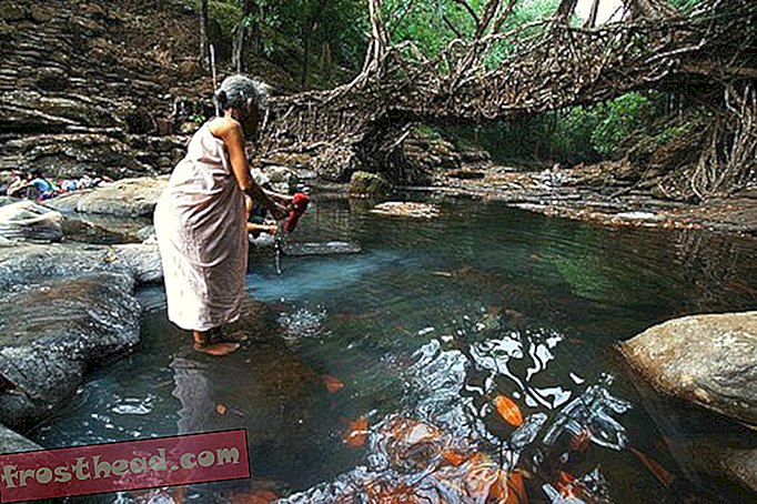 articles, blogs, science surprenante, science, notre planète - Amazing Living Root Bridges en Inde