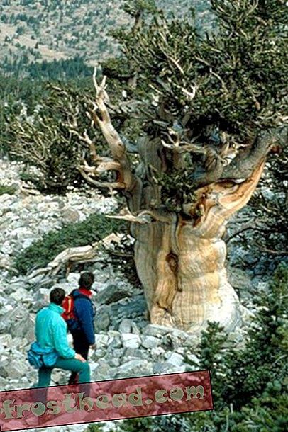 artiklid, reisimine, ameerika, Nevada - Nevada - kultuurilised sihtkohad