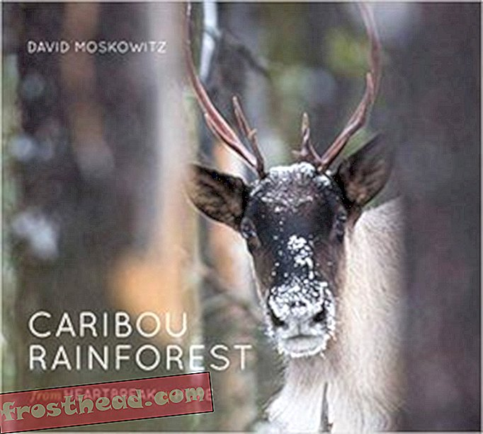 Preview thumbnail for video 'Caribou Rainforest: From Heartbreak to Hope
