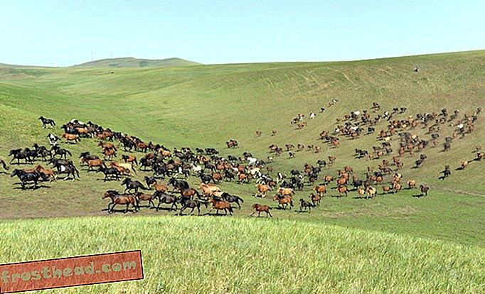 интелигентни новини, интелигентни новини изкуства и култура, интелигентни пътувания с новини - Най-дългата надпревара с коне в света продължава в момента в Монголия