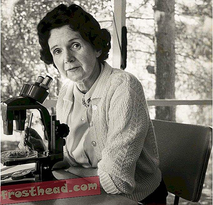 Rachel Carson napisala je tiho proljeće (djelomično) zbog autora Stuarta Littlea