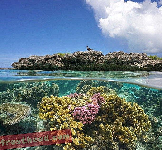 Οι κοραλλιογενείς ύφαλοι χρειάζονται λιγότερους αρουραίους και περισσότερο πτηνό Poo