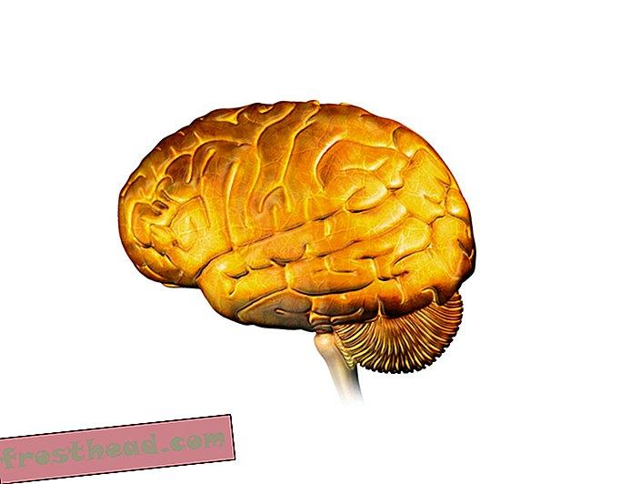 Las nanopartículas de oro pueden controlar a distancia el cerebro