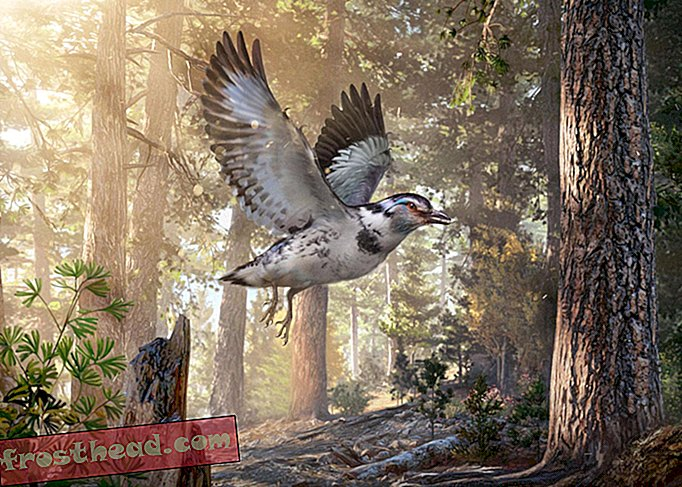 Pautan fosil 127-Million-Year-Old Old Dinosaur and Evolution Bird
